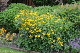 10 Best Perennials And Flowers by Texas Perennial Garden U2013 Top Ten Summer Perennials U2013 Lee Ann