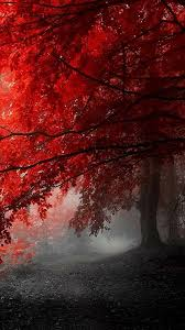 36 best colors of life the red images on pinterest red color