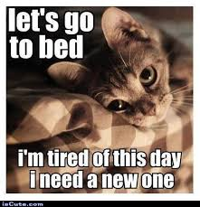 So Tired Meme - kitty needs a new day crafts ornaments pinterest kitten