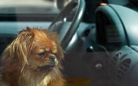 California Wildfires Pets by California May Let People Smash Car Windows To Save Pets Time Com