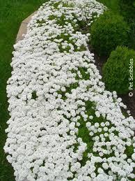 best 25 full sun garden ideas on pinterest sun garden full sun