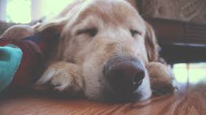put dog to sleep 10 signs to put your dog to sleep how to read them cloud 9 vets