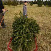 Christmas Tree Farm Va - middleburg christmas tree farm 29 photos u0026 16 reviews