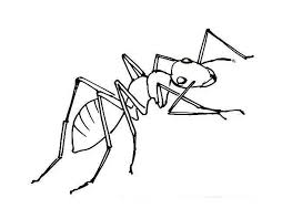 ant coloring pages sheets