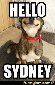 Sydney Meme - hello sydney meme factory funnyism funny pictures