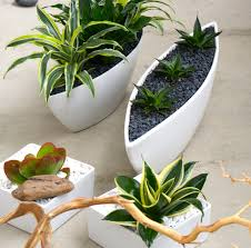awesome white indoor plant pots 61 for with white indoor plant