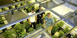 benefits of a sealed grow consistency and quality marijuana venture