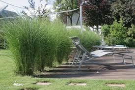 gartengestaltung mit steinen und grsern modern gräser sichtschutz garden gardens garden ideas
