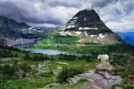 Montana National Parks images Mountain goat glacier national park montana usa art wolfe jpg