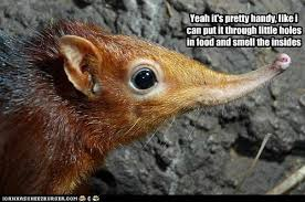 Rodent Meme - i can has cheezburger elephant shrew funny internet cats cat
