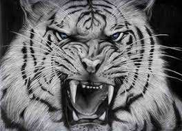 wallpaper black tiger hd tiger wallpapers tag page 4 of 9 amazing wallpaperz