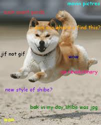 Doge Sex Meme - picture s that made your day