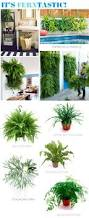 20 best living wall images on pinterest living walls indoor