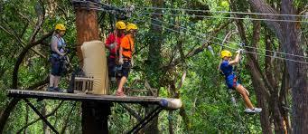 Treetop Canopy Tours by Kohala Zipline Canopy Tour U2013 Kohala Zipline