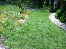 planting native grasses create a native habiturf lawn lady bird johnson wildflower center