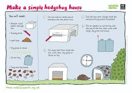 help a hedgehog