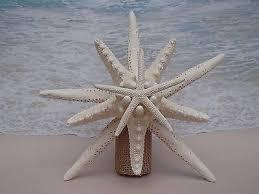 starfish tree topper tree