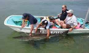 impact u2014 atlantic white shark conservancy