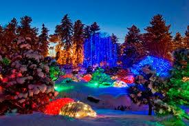 blossoms of light denver botanic gardens holiday light display 2013