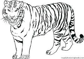 snow tiger coloring page tiger coloring picture medium size of tiger coloring pages tigers