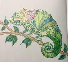 pin by bandit on magical jungle chameleon u0026 lizard pg 27 u0026 28