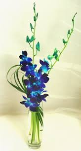 Blue Orchids Blue Orchid Bud Vase Any Time Flowers
