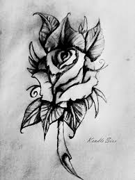 rose drawing by kendle sixx