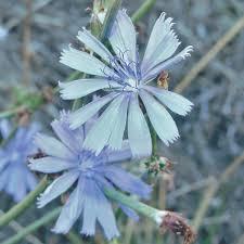 planting the seeds of innovation native plants gardening app west coast late season pollinator plants bee culture