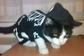 Kitten Halloween Costume Tfd Wild Prospect Mikael Granlund U0027s Amazing Goal Pet