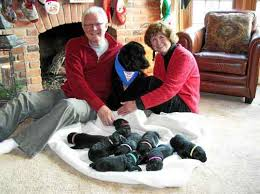Leader Dogs For The Blind Rochester Michigan Rochester Hills Couple Welcomes Puppies For Leader Dogs For The Blind