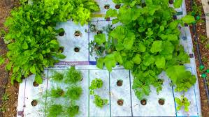square foot gardening flowers why micro gardening could go big the salt npr