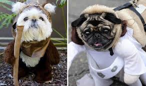 dogs dressed star wars characters barking mad films