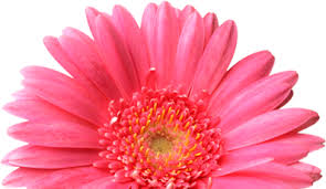 Flower Shop Troy Mi - send flowers to waterford bloomfield hills and lake orion mi with