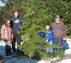 Cutting Christmas Tree - christmas tree hacks a puget sound guide to cutting the perfect