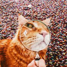 kristina makeeva professional cat photography kotleta cutlet kristina makeeva