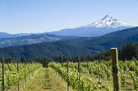 oregon ap wine imports