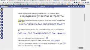 answers dna rna u0026 protein synthesis youtube