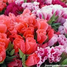 fresh cut flowers fabulous fresh cut flowers