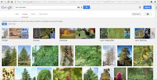 creating custom trees tutorial epic forums