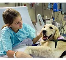 Comfort Dogs Certification Therapy Dogs Therapy Dog Certification