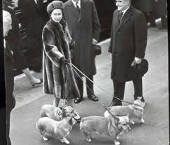 queen elizabeth dog report no more corgis for queen elizabeth
