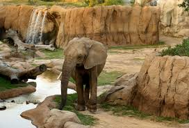 Zoo Increases Sales And Enhances The Dallas Zoo Now Knows What Its Elephants Are Really Doing At