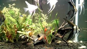 aquarium aquascape st charles aquascape designs pond supply