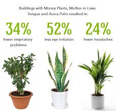 best plants for air quality best plants for bedroom air quality functionalities net