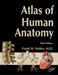 Human Anatomy Textbook Pdf Atlas Of Human Anatomy Pdf Periodic Tables