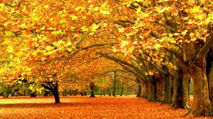 fall themed desktop backgrounds group 71
