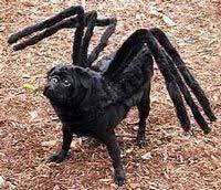 best 25 best dog halloween costumes ideas on pinterest best dog