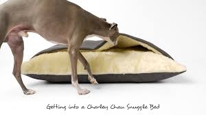 Cave Beds For Dogs Getting Into A Charley Chau Snuggle Bed Youtube