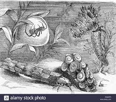vintage 19th century drawing representing various underwater