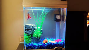 betta tank setup cool idea